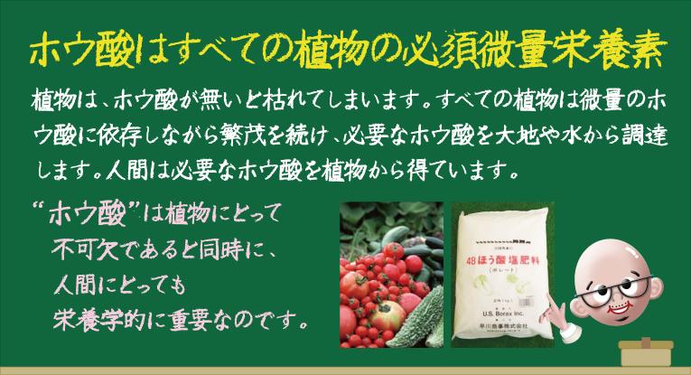 ホウ酸 (4).png